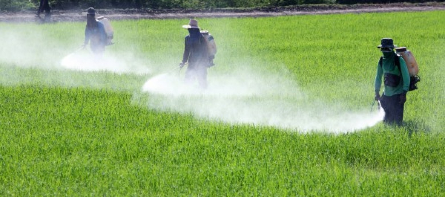 Danger Of Pesticides On Our Food
